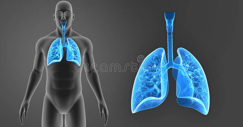 Human Lungs zoom with Body Anterior view stock illustration