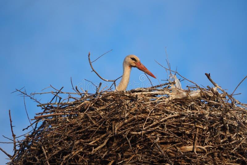 Ead av a behandla som ett barn storken, Lérida royaltyfri foto