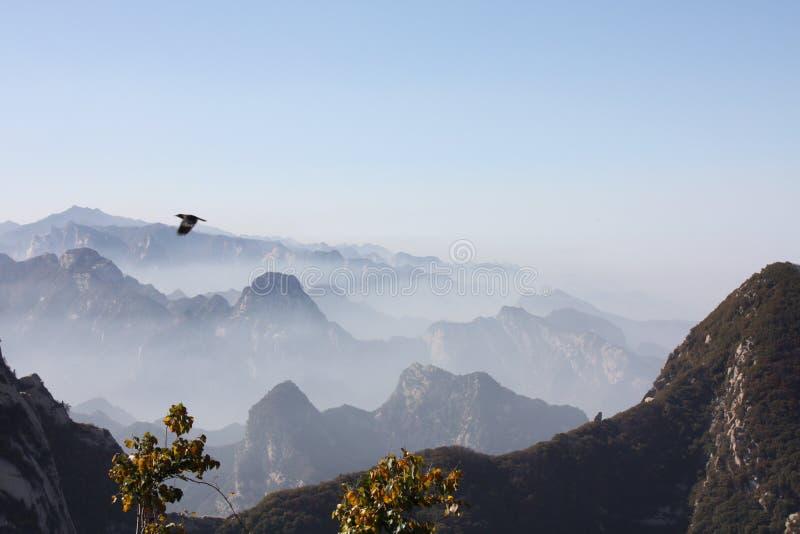 Eagle över Mt Hua Peaks arkivfoto