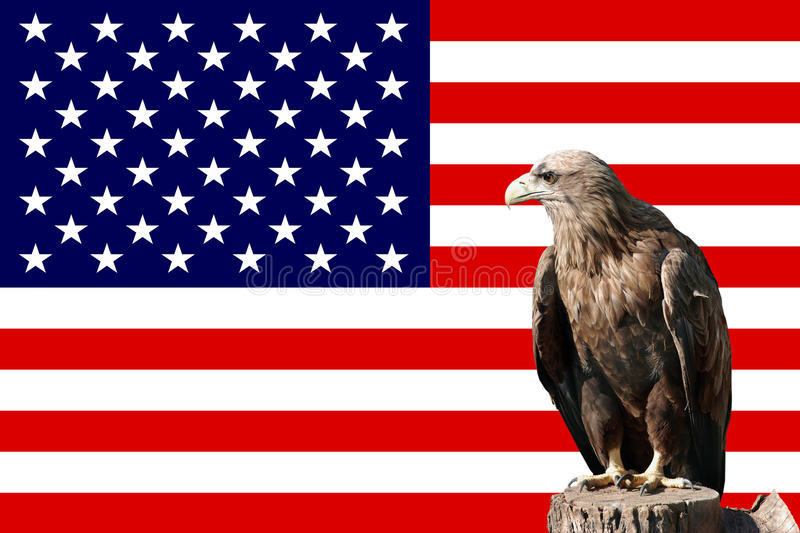 Download Eagle stock illustration. Image of flag, freedom, nobody - 11688014