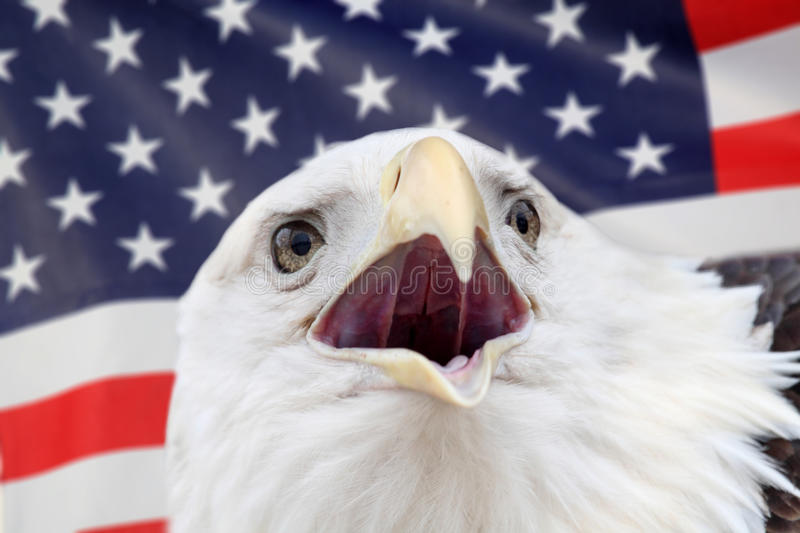 Eagle. In front of america flag