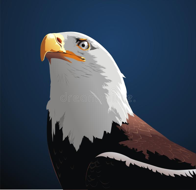 Download Eagle stock illustration. Illustration of bald, vector - 18249286