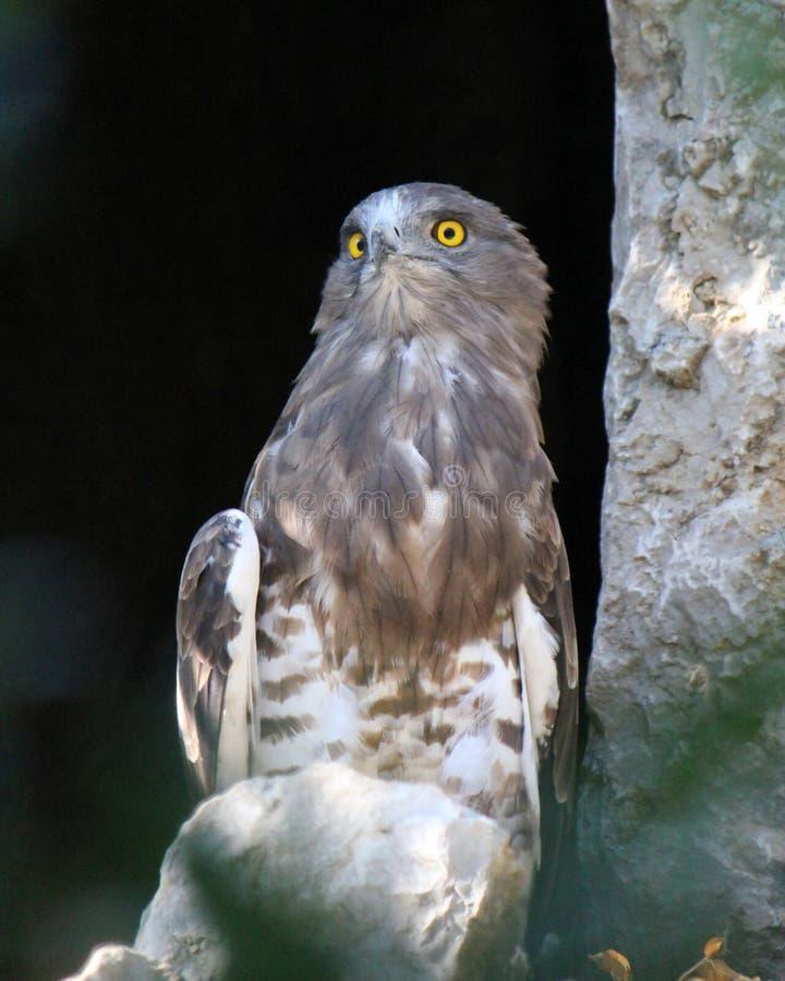 Download Eagle stock image. Image of graceful, head, beak, strength - 22022051