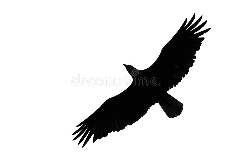 Download Eagle Royalty Free Stock Photos - Image: 2687718