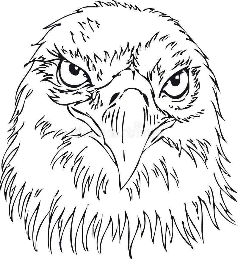 Free Eagle Stock Photo - 4628470