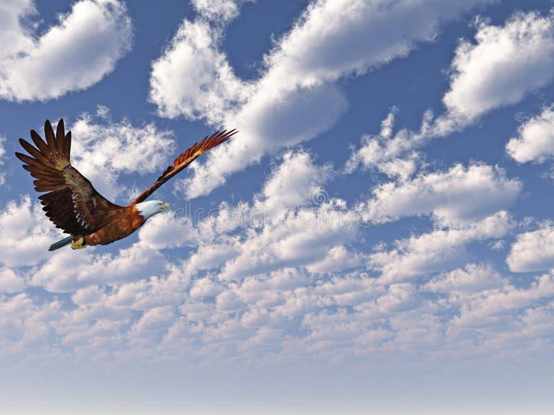 Eagle images libres de droits