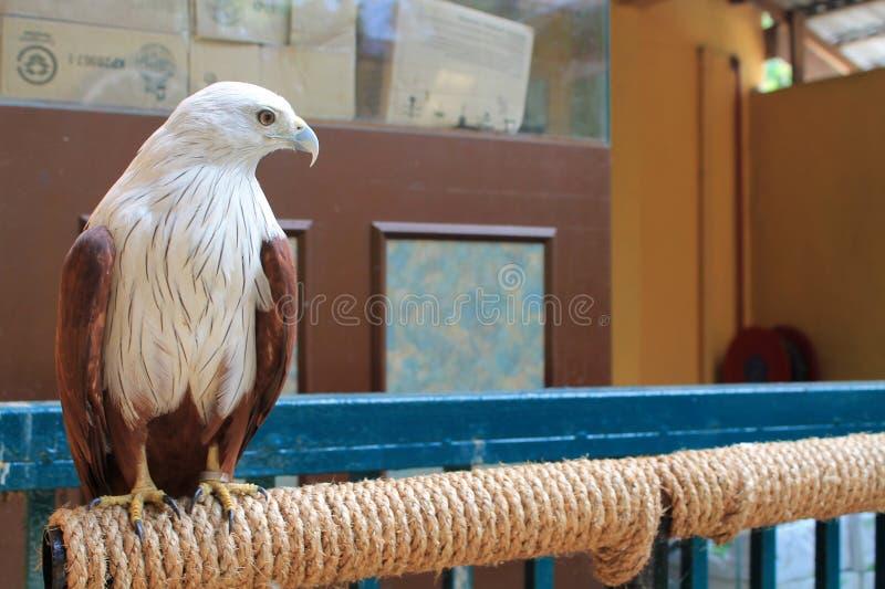 5 eagle 库存照片