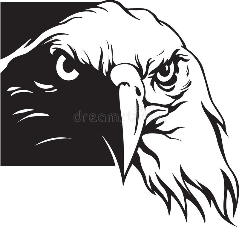 Eagle. Vector illustration of eagle head