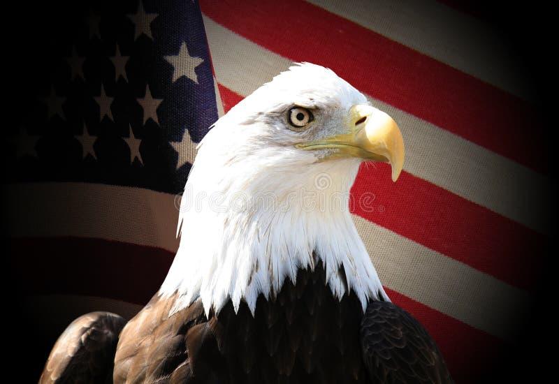 Eagle. Bald eagle over flag
