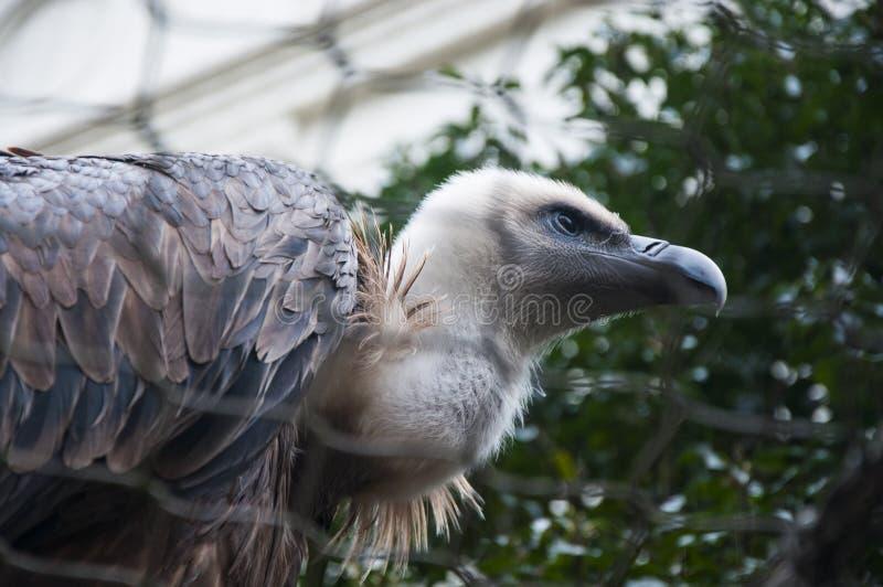 Eagle in Amsterdam stockbilder