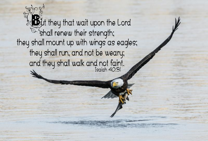 Eagle Bible Verse calvo fotografie stock