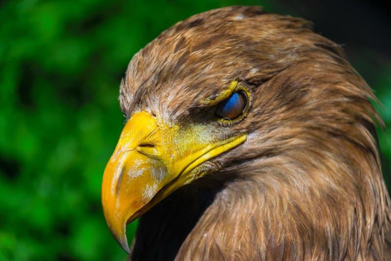 A eagle blink. Seen before a eagle blink stock image