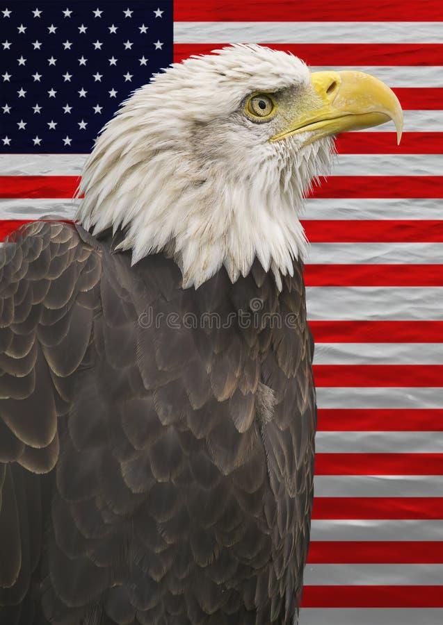 Eagle calvo con la bandera americana foto de archivo libre de regalías