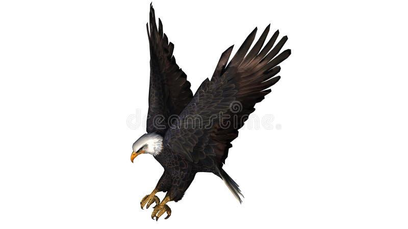Eagle calvo in mosca - fondo bianco fotografie stock