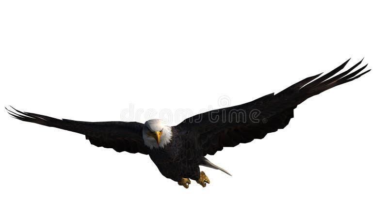 Eagle calvo in mosca - fondo bianco fotografia stock libera da diritti