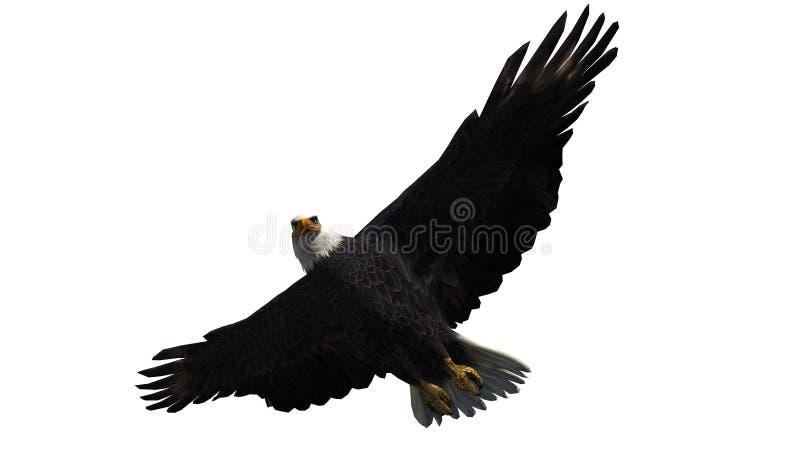 Eagle calvo in mosca - fondo bianco immagini stock libere da diritti