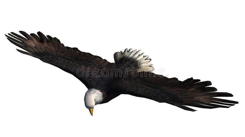 Eagle calvo in mosca - fondo bianco immagine stock