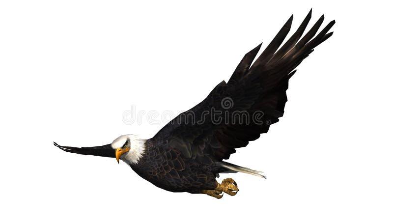 Eagle calvo in mosca - fondo bianco fotografia stock