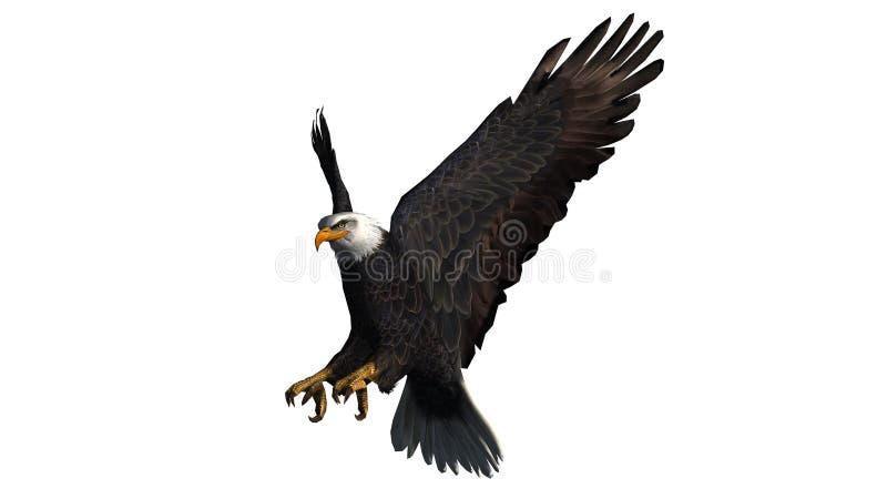 Eagle calvo in mosca - fondo bianco fotografie stock libere da diritti
