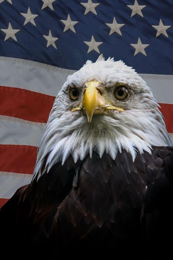 Eagle calvo norteamericano en bandera americana fotos de archivo libres de regalías