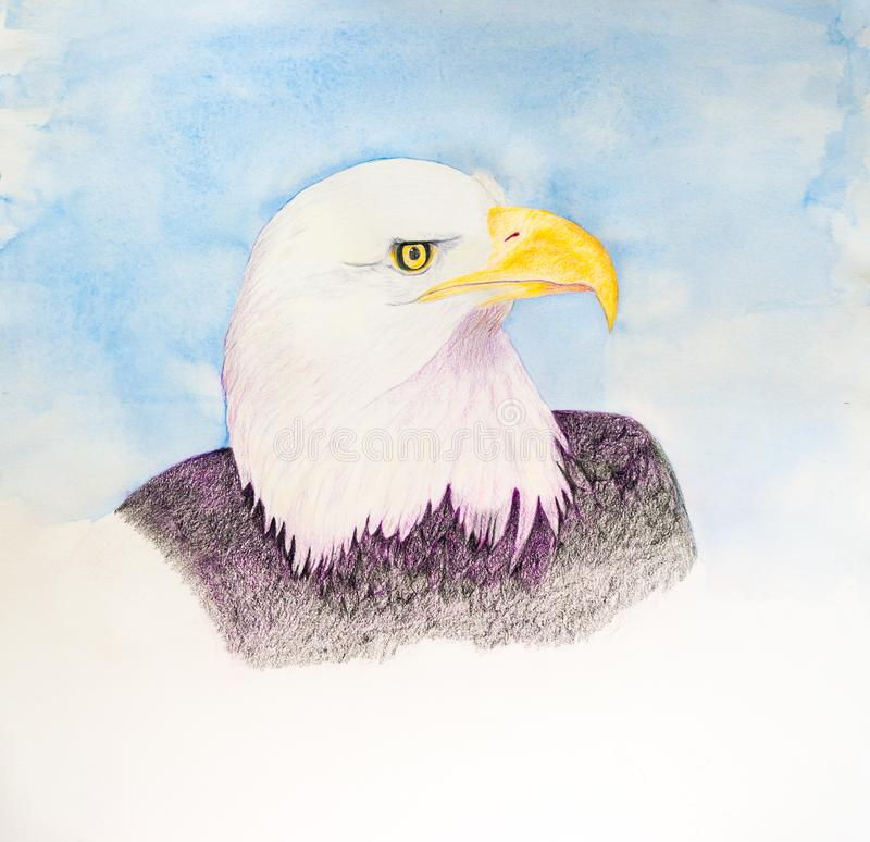 Eagle chauve américain - peinture originale d'aquarelle illustration libre de droits