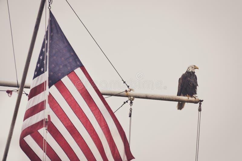 Eagle chauve sur un mât avec le drapeau 2 photo stock