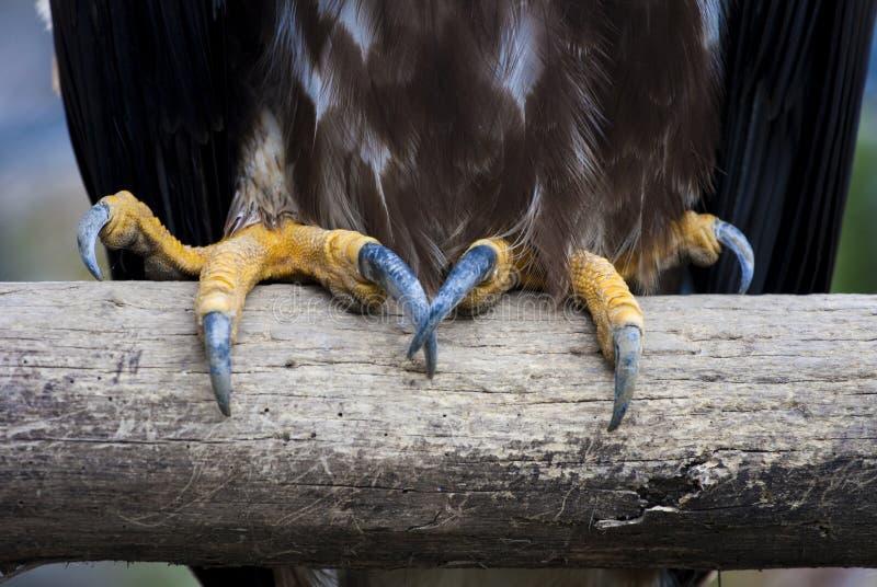 Eagle claws stock photos