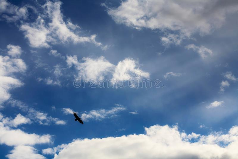 Eagle in the clouds. Eagle in the sky on the background of clouds royalty free stock image