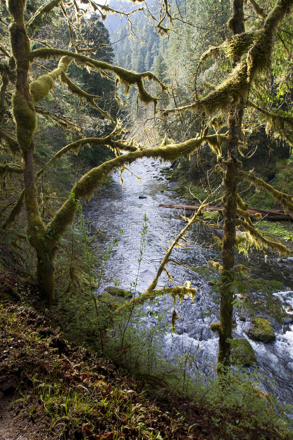 Eagle Creek Trail photo stock