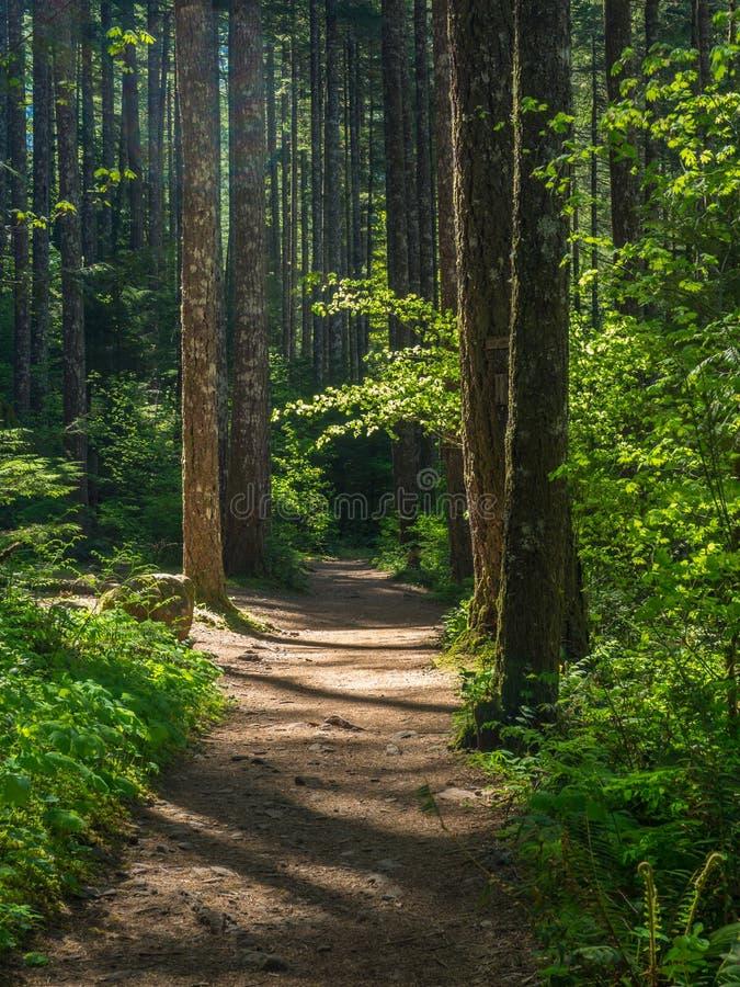 Eagle Creek Trail photographie stock libre de droits