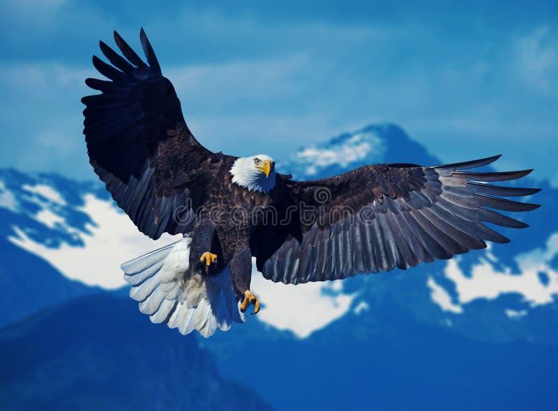 Eagle dirigeant une proie photos stock