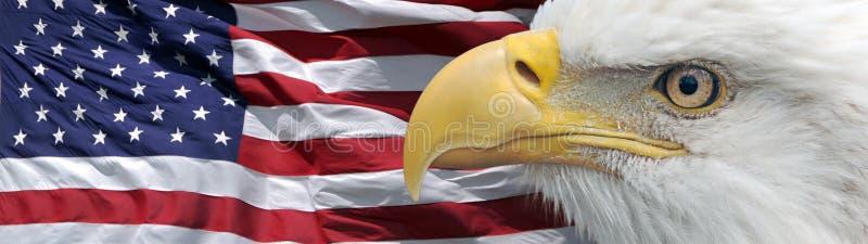 Eagle e bandeira da bandeira imagens de stock