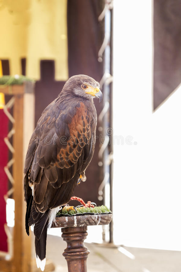 Eagle em um estalajadeiro foto de stock royalty free