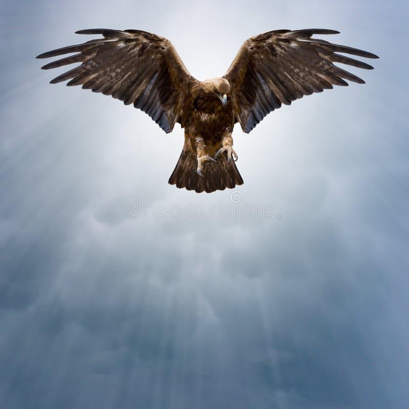 Eagle en el cielo oscuro foto de archivo