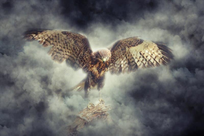 Eagle en humo imagen de archivo