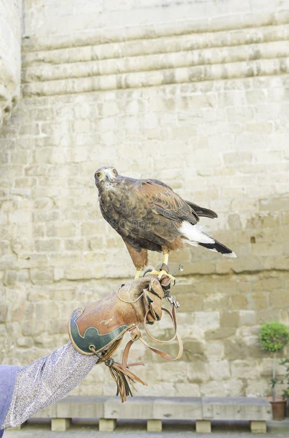Eagle en position photographie stock