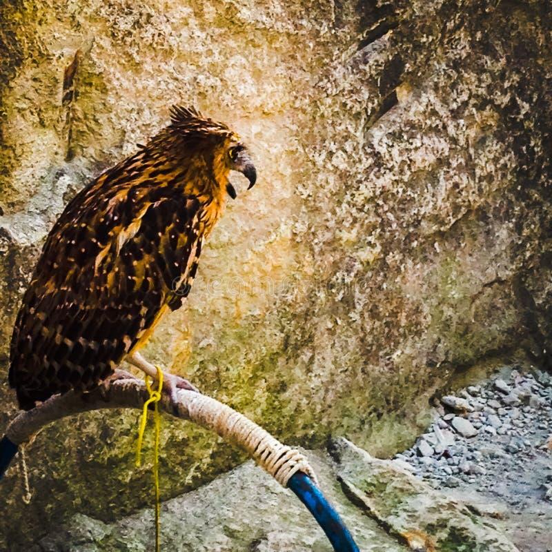Eagle Eye fotos de archivo libres de regalías
