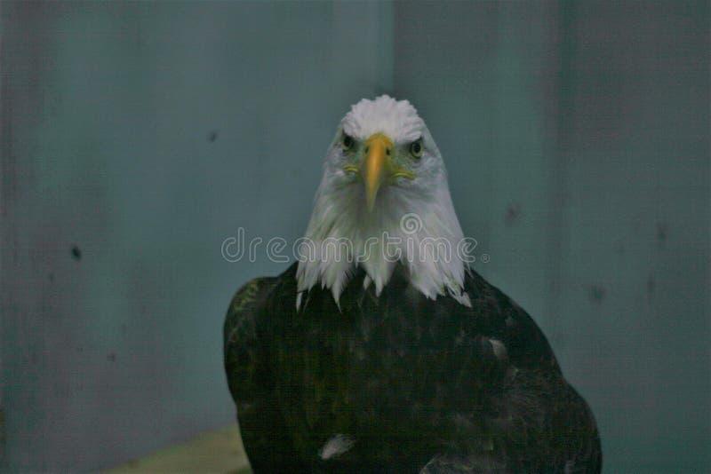 Eagle Eye stockfotografie