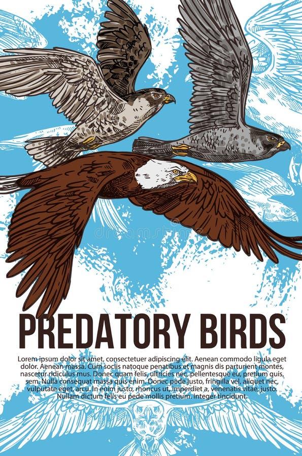 Eagle, för falk och för hök rov- fåglar, vektor stock illustrationer