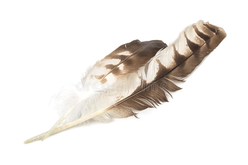 Eagle feather isolated royalty free stock images
