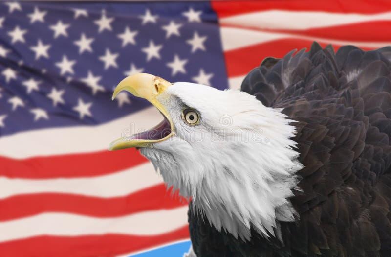 Eagle with flag. Bald eagle composite