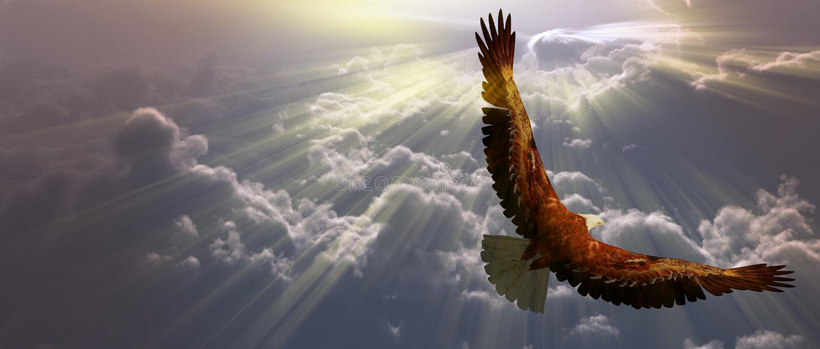 Eagle in flight above the clouds stock illustration