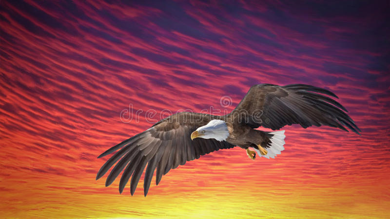 Eagle Fly Sunset ilustração royalty free