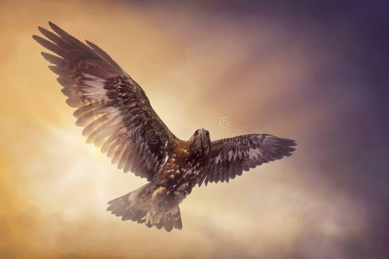 Eagle flyga arkivbild