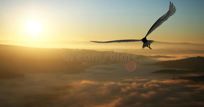 Eagle. Flying in the clouds at dawn
