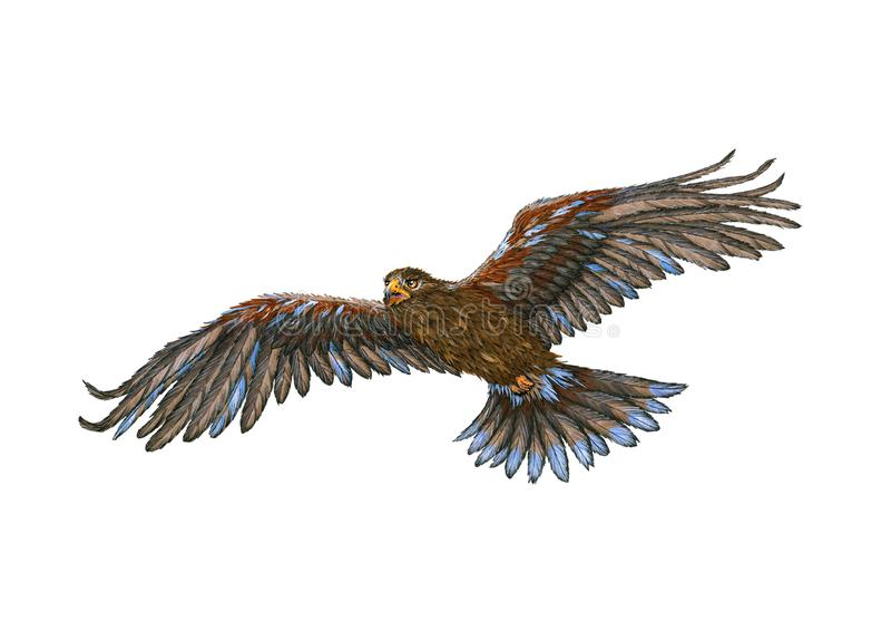 Eagle Flying Watercolor Painting dorato royalty illustrazione gratis