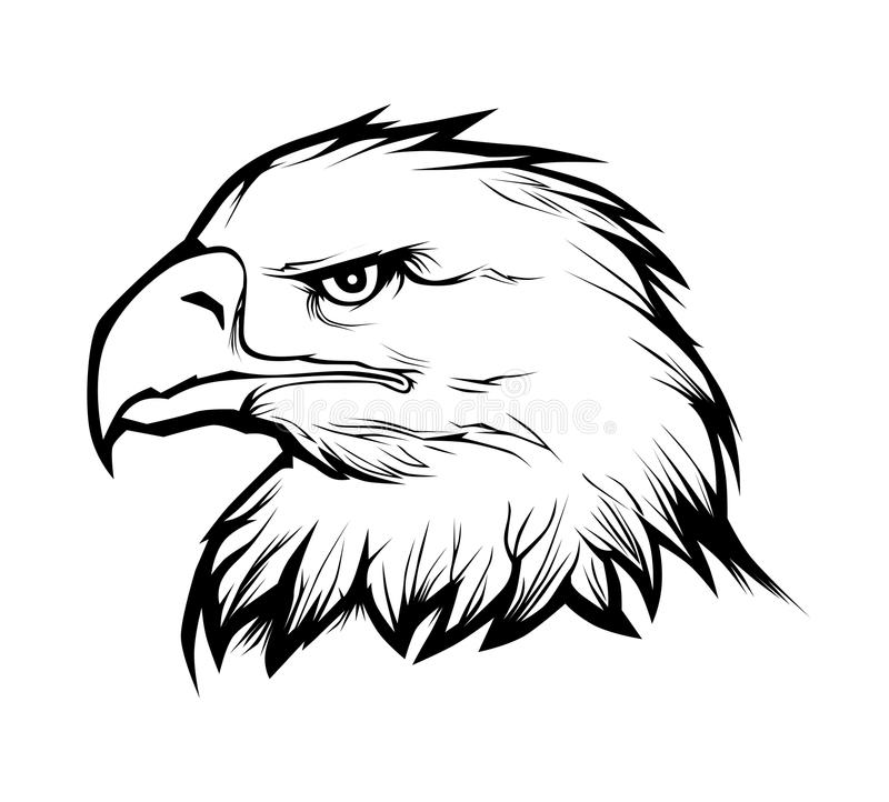 Eagle head. Realistic eagle head. Black and white vector illustration