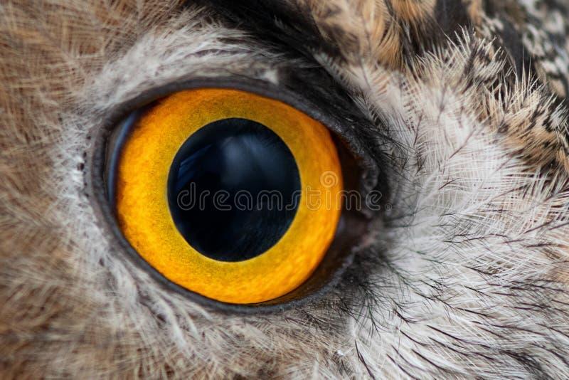 Eagle-het close-up van het uiloog, oog van Europees-Aziatisch Eagle Owl, bubobubo royalty-vrije stock foto