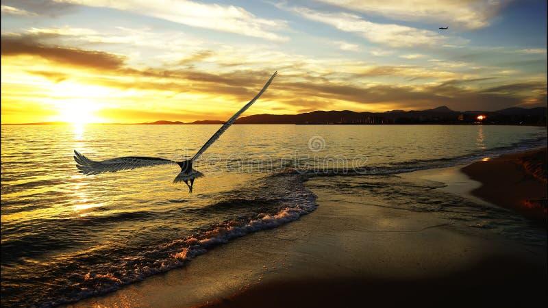Eagle-het vliegen stock fotografie