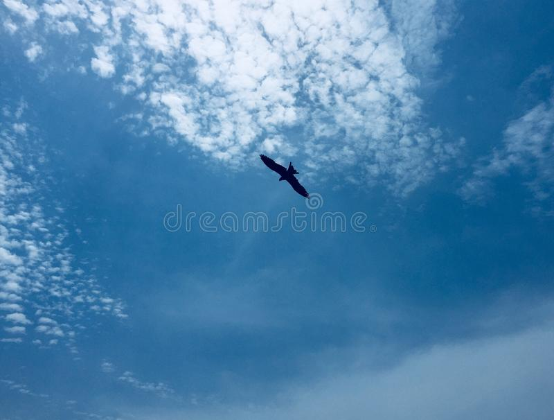 An eagle hovering on a backdrop of clear blue skies. An eagle hovering on a backdrop of clear blue skies in Kunoor stock photos